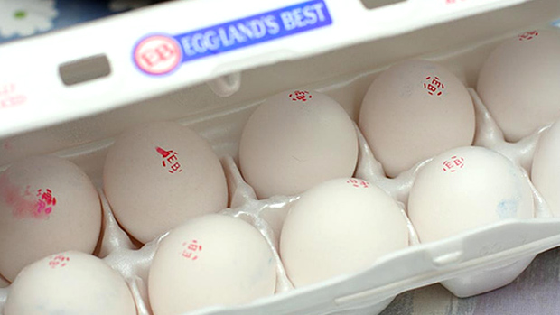 Omega-3 Enriched Eggs