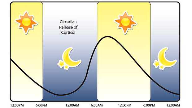 Circadian Release of Cortisol